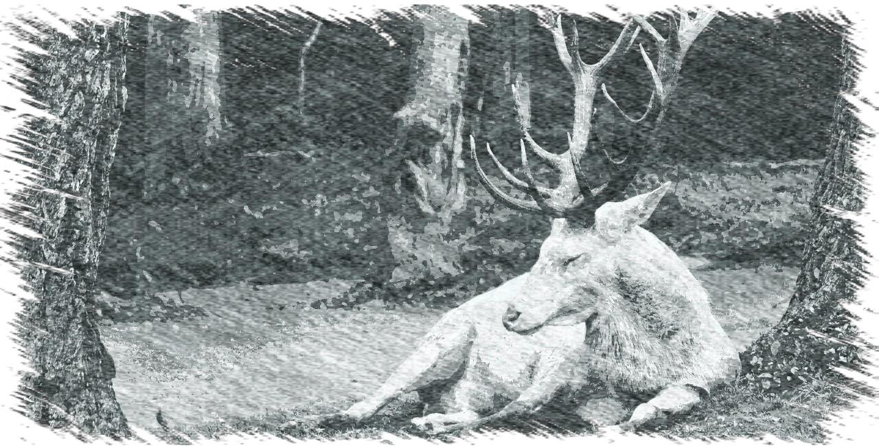Der weiße Hirsche von Lochau